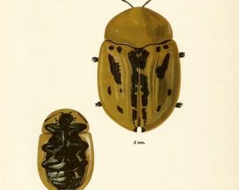 VINTAGE BEETLE PRINT 1964 Green Brown Beetle Art - Perfect for Boys Bedroom, Entryway, Bathroom, Hallway, Office, Birthday, Christmas (B50)