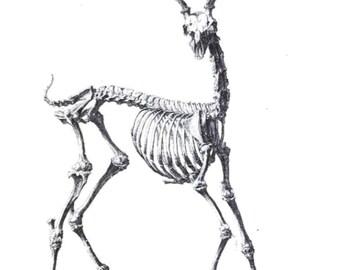 """Deer Skeleton Temporary Tattoo - """"Oh Deer"""""""