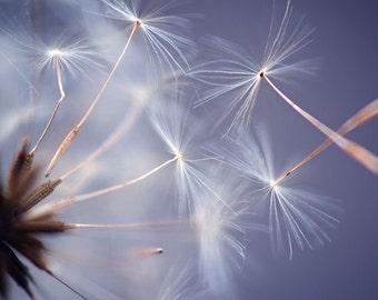 Dandelion Seeds Photograph, Fine Art Print, Nature Photography, Nature, Wall Art, Flower Photograph, Fly Away