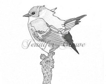 "Giclee Print: ""Miss Ruby Redstart"" Pen & Ink Illustration"