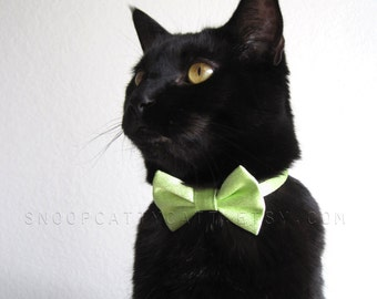 Cat Bow Tie - Can't Pinch Me