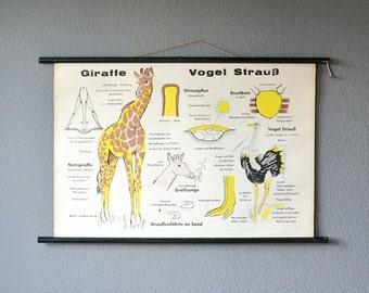 Giraffe print, Giraffe poster, nursery print, nursery poster, school poster, vintage school chart, roll down chart