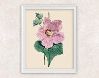 Hibiscus Botanical Art Print - Pink Flower Print - 8x10 PRINT - Garden Prints - Illustration - Poster - Victorian Art - Item #155