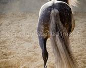 SPIRO, Andalusian Horse, Dapple Grey, Edition Art Print, Wall Decor, Equine Art, Horse photography