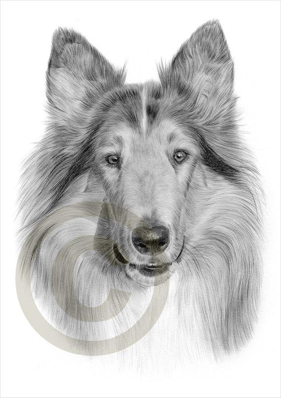 Matita di rough collie cane disegno opera di formato a4 for Cane disegno facile