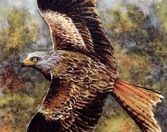 RED KITE - Autumn,  A Signed, numbered, limited print by Andrew Bailey. Birds, Birds of Prey, Wildlife. Woodland watercolours. Welsh art.