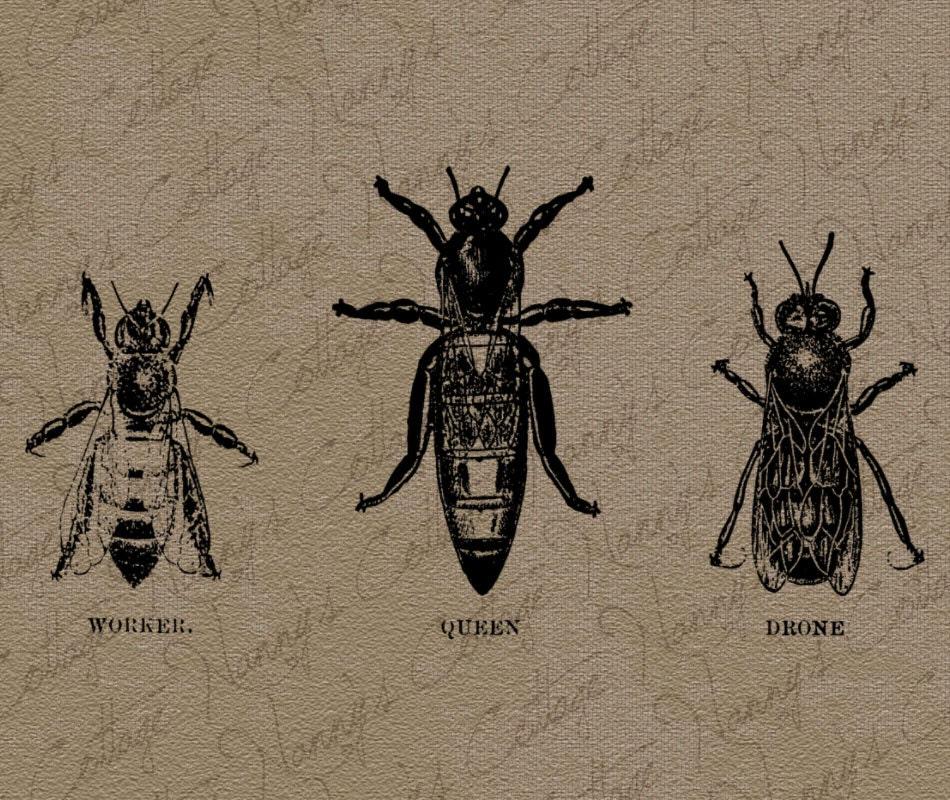 vintage bee clip art - photo #25
