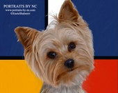 Yorkie Portraits - Pet Portraits - PetPortraitsbyNC