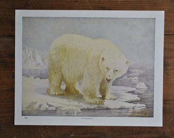 vintage polar bear print - Perry Pictures Nature Prints