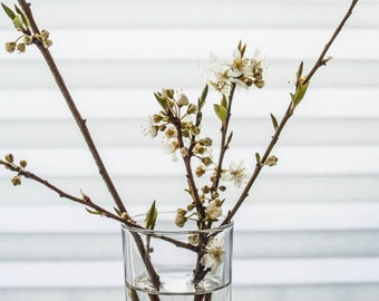 Minimalist twig photography  White cherry twigs // photography  vase  wall art  spring