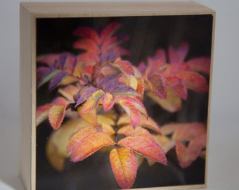 Red Gold Leaves Photograph on Natural Wood--Autumn's Beautiful Breath--4x4 Fine Art
