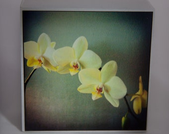 Yellow, Green, Blue Orchid Photograph on White Wood--Orchids in Triplicate--4x4 Fine Art