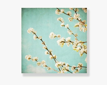 Teal and white blossom canvas art, flower photo canvas, mint sky, shabby chic decor, spring nature photograph - The Sweet Life