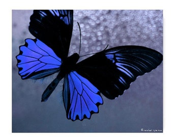 Blue Butterfly Photograph Affordable Art Natural History Nature Photography Decor Nature Lover Woodland Scene Butterfly