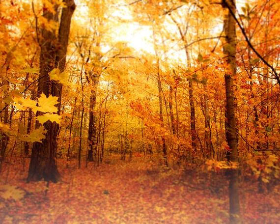 Autumn forest, maple trees, orange leaves, harvest gold, pumpkin orange, halloween, fall colors, dreamy photography, cottage decor, leaves