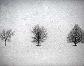 trees landscape photography snow winter fine art photography office decor home decor