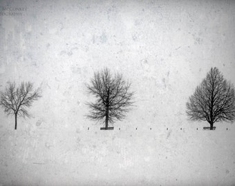 Black and White Living Room Decor, Snow Scene, Winter Trees, Silbouttes, Bedroom Decor