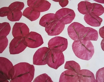 Dried Pressed Flowers for Crafting - Pink bougainvillea