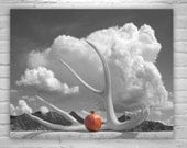 Surreal Black and White Photography, Pomegranate Art, Still Life Art, Fine Art Photography, Murray Bolesta