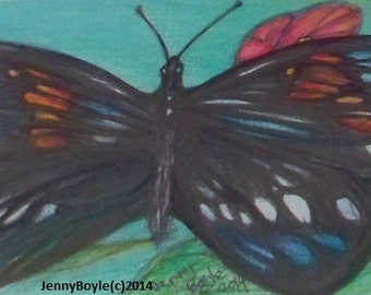 butterfly wildlife aceo art magnet
