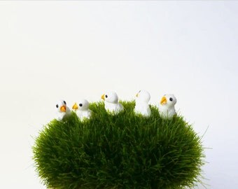 5 Little Baby Duck/ Miniature Duck/ Duck Terrarium Accessories/ Tiny Chick/ Fairy Garden Accessories