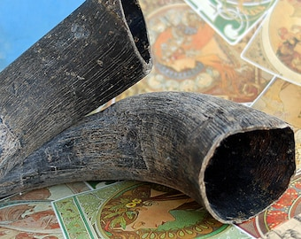 buffalo horns,  for your artistic needs, display,  home decor, photography prop, Coolvintage, K65
