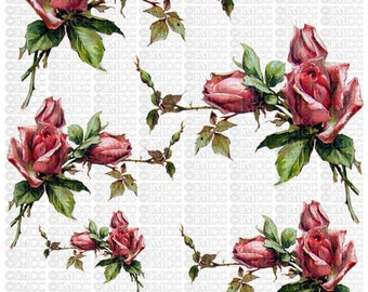 Instant Digital Download Cottage Cabbage Pink Roses Flowers Floral Vintage Era Clip Art Transparent Background PNG - U Print ECS