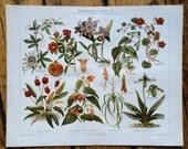 1894 house plants & flowers original antique botanical flora print no 2