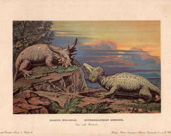 c. 1902 DINOSAUR PRINT - elginia & hyperodapedon - rare original antique print - fossil reptiles - extinct animal print - prehistoric animal