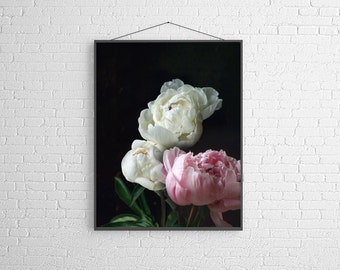 Still Life Photography of Pink and White Peonies