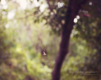 I heart fall autumn-falling leaves-fall photography - autumn decor - autumn photo (8 x 8 Original fine art photography prints) FREE Shipping