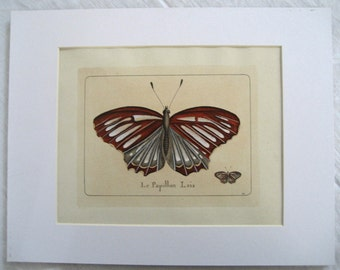 vintage hand colored  butterfly etching