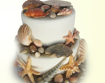 edible sea shells with sand natural color set of 55