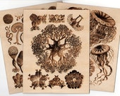 Burnt Wood Wall Art - Scientific Illustrations of Natural Phenomena Engraving Print Nature
