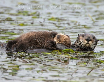 50% OFF SALE, Mom and Baby Sea Otter Photo, Baby Animal Nursery Art Print, Animal Wall Art, Animal Nursery Decor, Ocean Nursery, Otter Pup