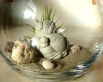 Lucky Pug Buddha Sculpture in Zen Garden Air Plant DIY Terrarium