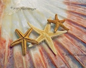 Scallop Sea Shell Starfish Macro Nature Wall Art Home Decor Fine Art Photography