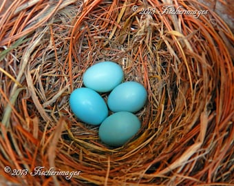 Bluebird Photography From Eggs to Babys Set of Three Nature Birds Wall Art Home Decor Digital Download Fine Art Photography