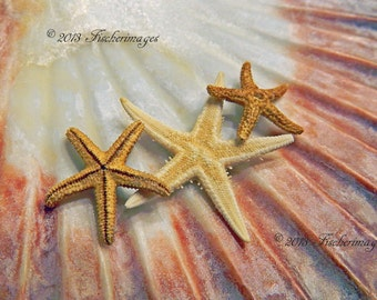 Scallop Sea Shell Starfish Macro Nature Wall Art Home Decor Fine Art Photography