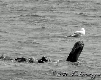 Black & White or Color Single Seagull Perched on Old Post with few Rocks Trailing in Sea of Water Wall Art Home Decor Fine Art Photography