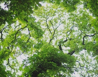Up in the Trees - Fine Art Photograph, Spring, Green, Nature