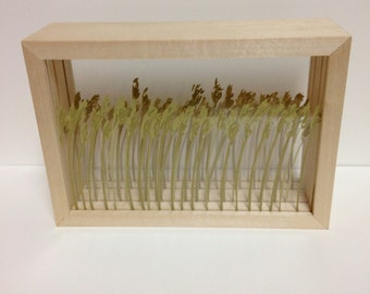 Stand Of Reeds Shadowbox