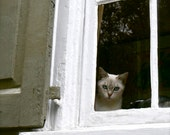 Cat Photography Print - Kitty Photo - Window Photography Charleston Photograph Taupe White Southern Wall Decor Minimal Soft Simple