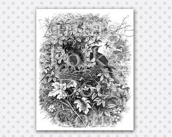 Clip Art Birds Nest Victorian Engraving Vintage Bird Graphics Printable Digital Instant Download