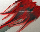Red Badger Rooster Feathers Fly Tying Feathers for Earrings Red Craft Feathers Bright Red Color Black and Red Real Bird Feathers, 12 PCS