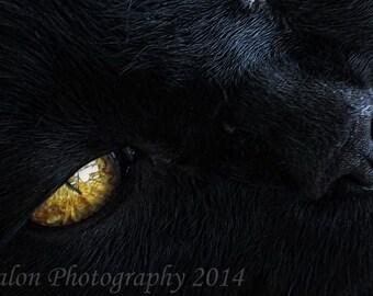 Cat Eye! original color print closeup of cat eye