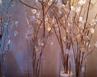 silver dollar plant, Lunaria, moonwort, money plant, Honesty,  300 pods on stems. Shelled Organic 2015 Harvest