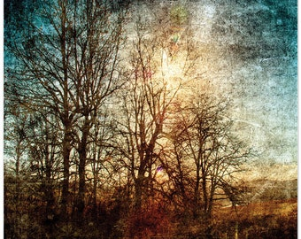 Woodland forest, tree photography, textures, sunlight, fine art, fine art print