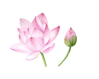 Lotus Blossom, watercolor painting