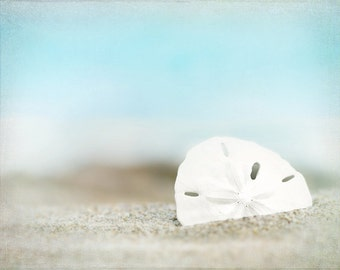 sand dollar art, sand dollar photography, wall art,  beach print, sky blue ocean, beach cottage decor, pale, shore house, beach house decor